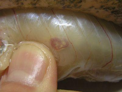 паразиты в красной рыбе опасные для человека